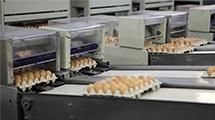 Lebensmittelindustrie - MSR Golombek Temperaturmesstechnik GmbH